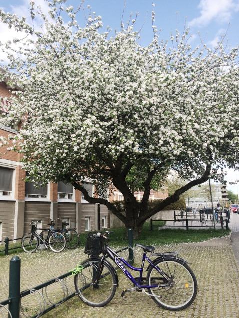 my bike ft. the green lock